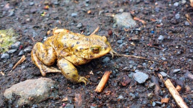 frog spring 2013-2