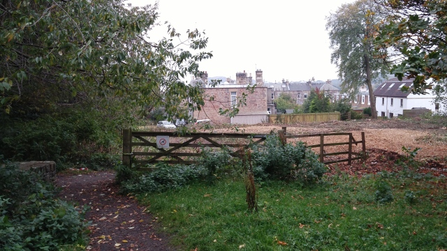 Woodland clearance at the top of Craiglea Place