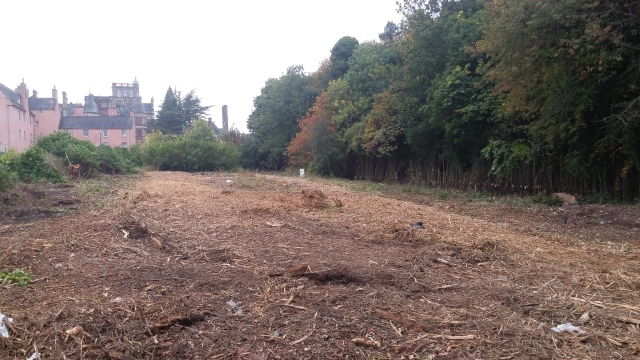 Woodland cleared by front entrance to the site